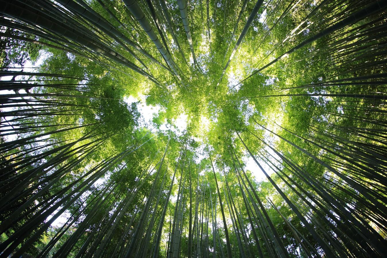 Servizi ecosistemici e scelta europea di neutralità climatica al 2050