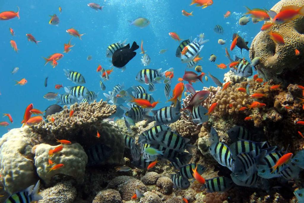 Ecosistema marino biodiversità